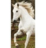 Animal Pictures White Horse - Strandlaken - 70 x 140 cm - Multi