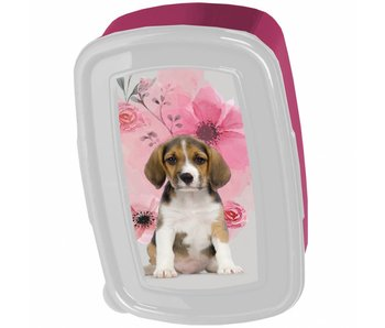 Animal Pictures Lunchbox Beagle