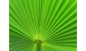 Palmbomen-palms