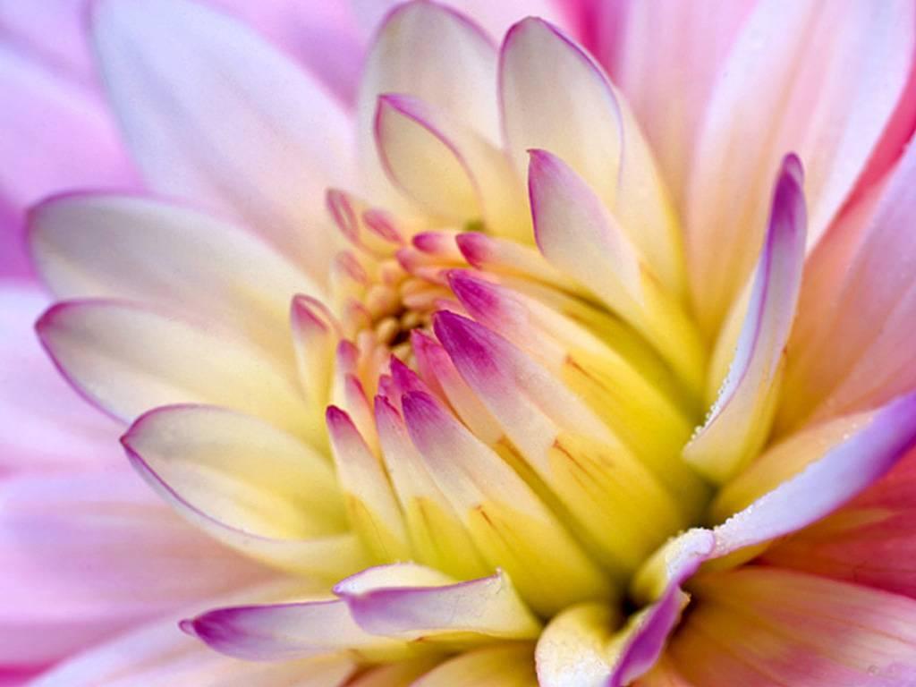 Bloemen-flowers