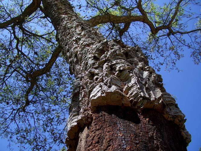 Bomen-trees