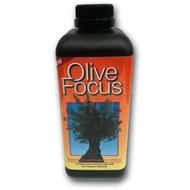 Produkten Olive Focus