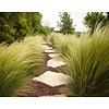 Siergrassen-ornamental grasses Stipa tenuissima Pony Tails - Vedergras