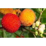 Eetbare tuin / edible garden Arbutus unedo - Aardbeienboom