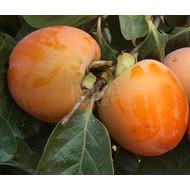 Eetbare tuin / edible garden Diospyros kaki - Kakiboom - Sharonfruit