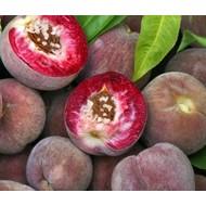 Eetbare Tuin Prunus persica Roter Weinbergpfirsich - Perzikboom