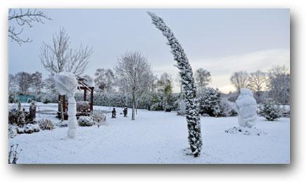 winterbescherming palmen