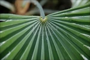 Onderhoud palmbomen