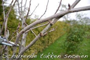 Snoeien waterloten bij fruitbomen
