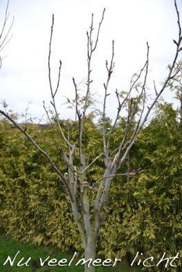Gesteltakken snoeien fruitbomen