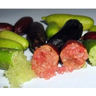 Eetbare tuin-edible garden Citrus australasica - Finger lime - Lime caviar