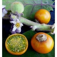 Eetbare Tuin Solanum quitoense - Naranjilla - Lulo