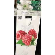 Eetbare tuin-edible garden Rubus idaeus Heritage - Raspberry