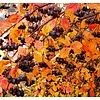 Eetbare Tuin Aronia prunifolia Viking - Zwarte appelbes