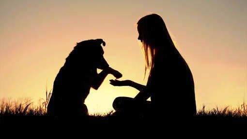 Wat kersverse hondenbaasjes snel ontdekken