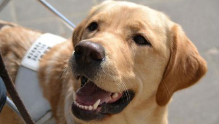 KNGF-hond heeft terecht de Gouden Loeki gewonnen
