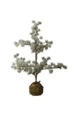 Lene Bjerre Cedar Pine