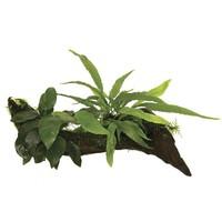 Waterplant Wood Anubias micros & mos Small