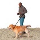 Hondenriem