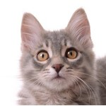 Kattenspullen