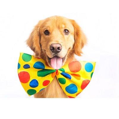 Hundeleuchthalsbänder