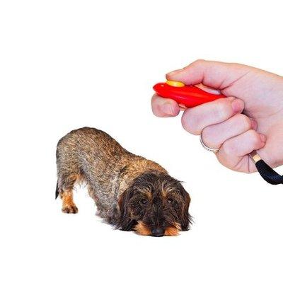Hundetraining Zubehör