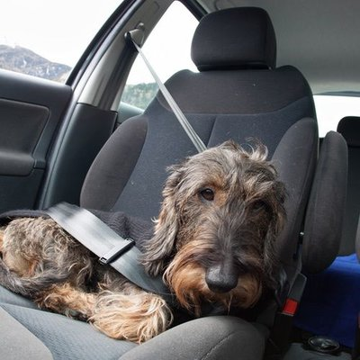 Hunde Befestigung / Sicherung