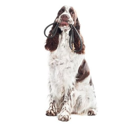 Hundeführleine