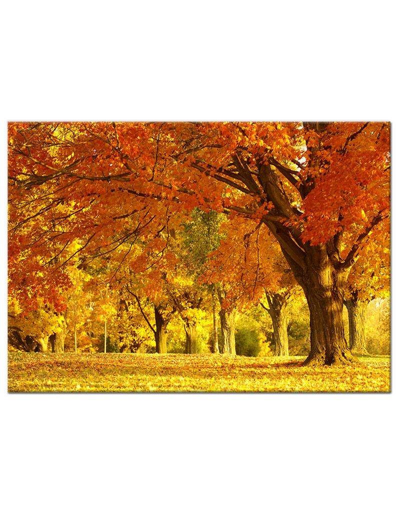 schilderij herfst bos op canvas doek my little gallery