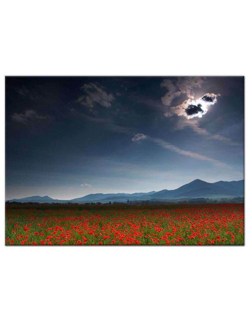 Foto schilderij veld met klaprozen my little gallery - Foto van slaapkamer schilderij ...