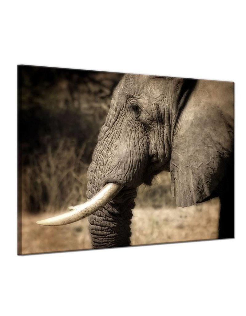 Schilderij olifant my little gallery for Schilderij olifant