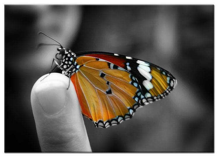 Schilderij vlinder kleuraccent op canvas my little gallery - Kleur schilderij slaapkamer volwassen foto ...