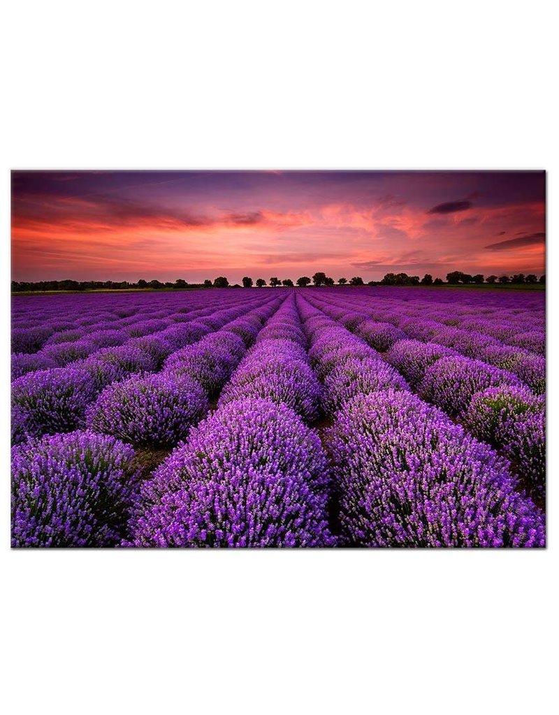 Canvas schilderij lavendel