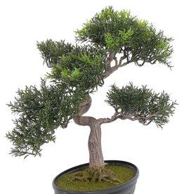 Tealeaf bonsai 40cm