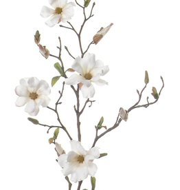 Magnolia 75cm 4fl, buds