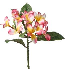 Frangipani (Plumeria)  12 Blüten, 5 Knospen, 5 Blätter,  73cm
