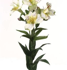 "Alstroemeria ""bella"" 75cm"