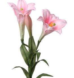 "Lily ""longiflorum"" (easter lily) 76cm"