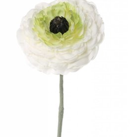 "Ranunculus ""little joy"""