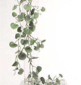 Dichondra hangplant 'silver falls' x72lvs 116cm