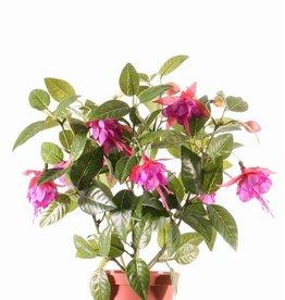 Fuchsia plant in pot x12flrs & 108lvs 30cm