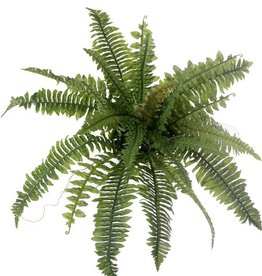 Boston Fern, X26, Ø 41cm