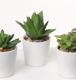 Succulentmix x3, H.12cm, with stones in white ceramic pot 7x7cm, set of 12pcs