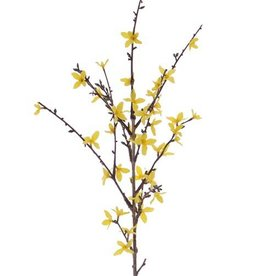 Forsythia branch with 41 flowers, 88 cm, grey-green stem