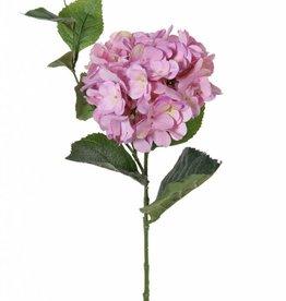"Hortensia ""Spring Dream"" x1blm (96bld),10bld & scheut,78cm, Ø 15cm"