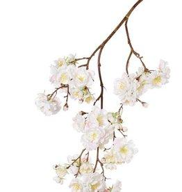 "Prunus Serrulata (Japanese Cherry Blossom)""Full blossom"", x51flrs (16L/11M/24S) & 19bud, 91cm"