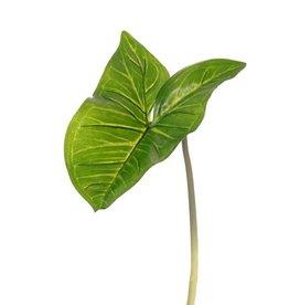 """Arum Maculatum leaf (Syngonium) """"Naturals"""" (PE) 15x23cm, 53cm"""