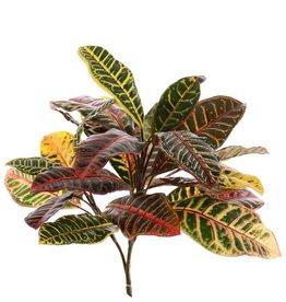 Croton plant medium x3, x24lvs, 50cm