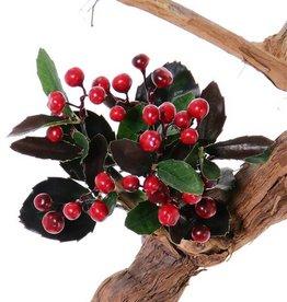 Bergthee (Gaultheria) x6, 30blad, 30bessen, H15cm
