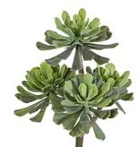 Aeonium bush x4, Ø 14/11/10cm, 33cm - without pot